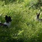 august-vilde-kaniner-1