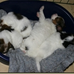 2009-11-10-sover